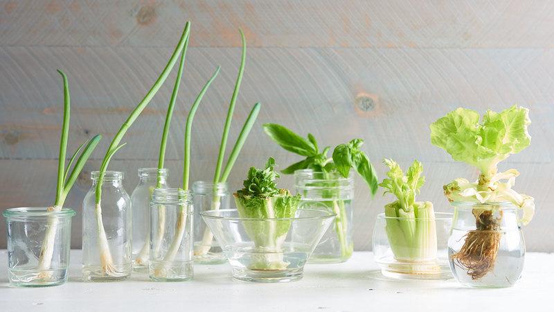 Ainda deita fora os caules dos vegetais? Um copo e água é o bastante para que voltem a brotar
