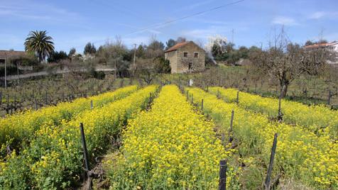 Douro na primavera: um prazer que não se explica
