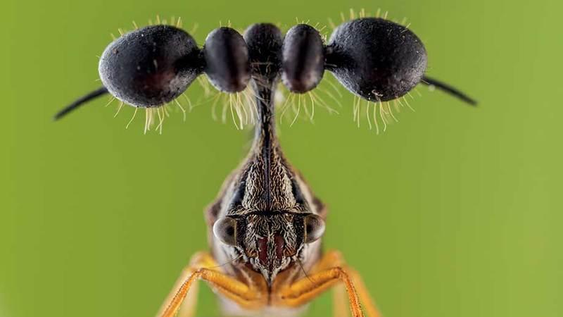 Mini-monstros da floresta tropical que são mestres em disfarces