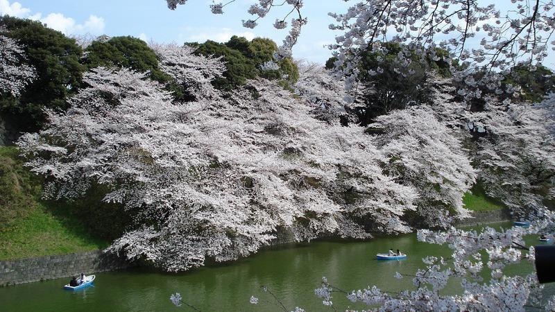 Japão: Será esta a primavera mais bela do mundo?