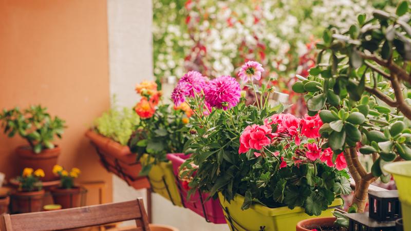 As melhores plantas para uma varanda e para um terraço pequeno