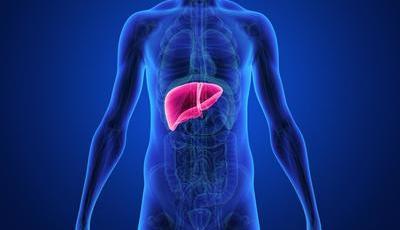 Fígado gordo: tudo o que precisa de saber