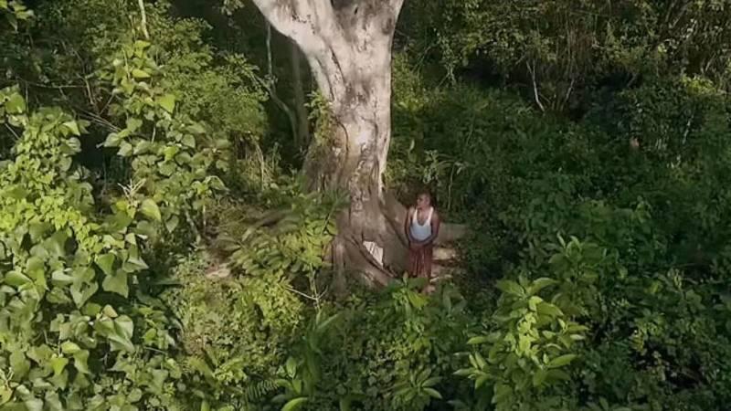 Planta uma árvore por dia há quase 40 anos e transformou uma zona árida numa imensa floresta
