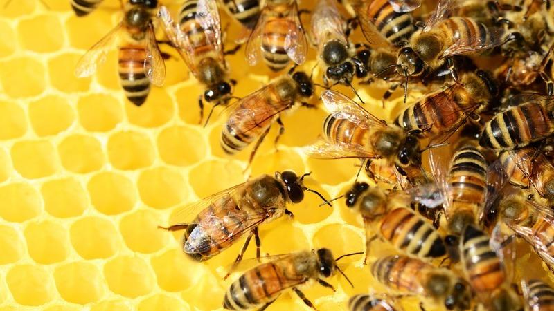 """Conhecer e proteger abelhas através de """"colmeias inteligentes"""" ou quando a tecnologia ajuda a natureza"""
