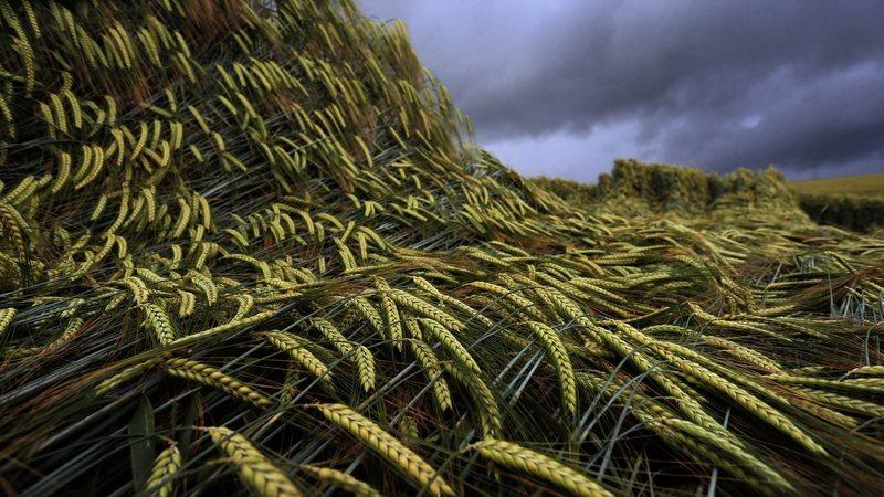 Quinze Estados-membros, incluindo Portugal, exigem mais verbas para a política agrícola comum