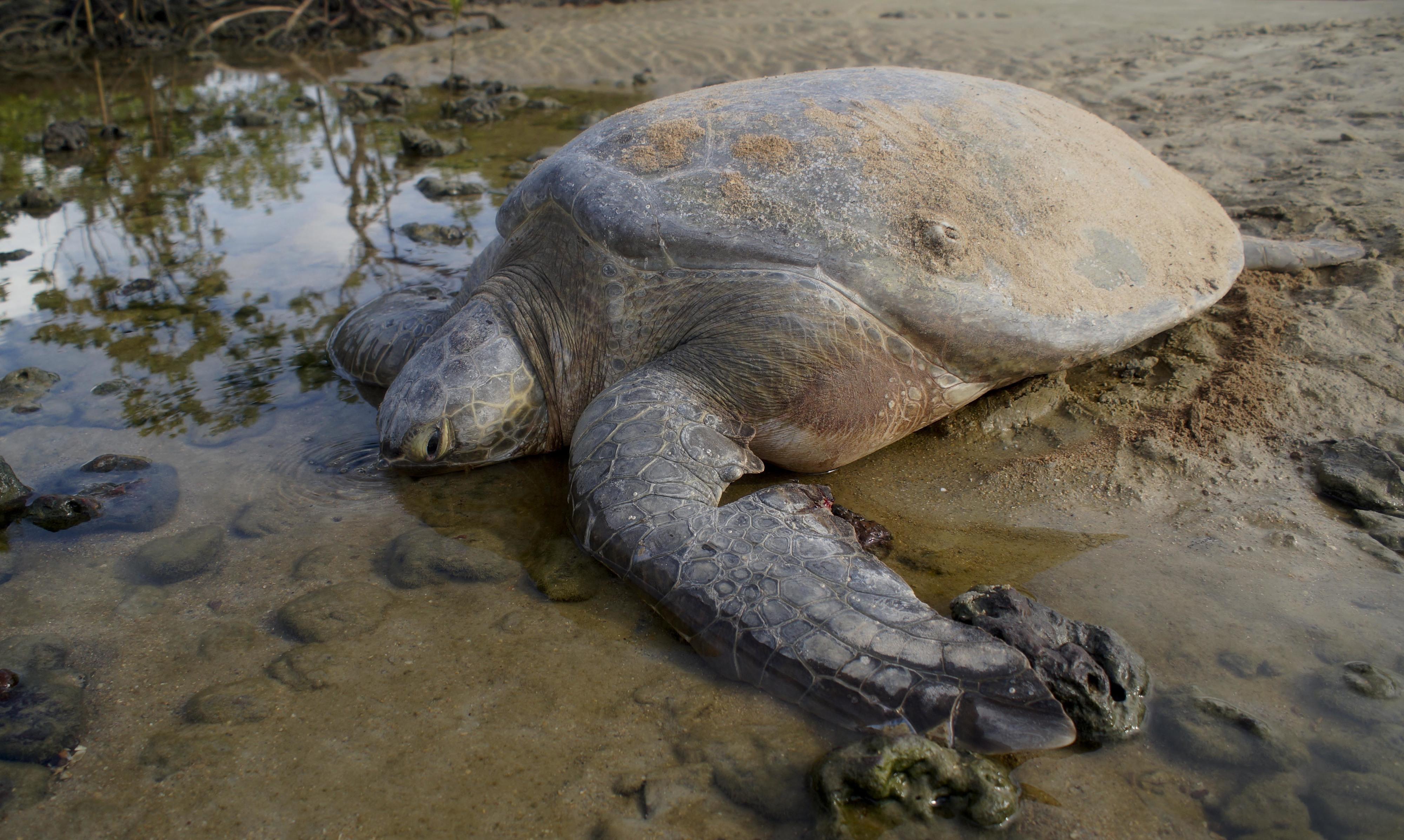 Ambientalista diz que ninhos de tartarugas nas praias de Cabo Verde devem atingir recorde este ano