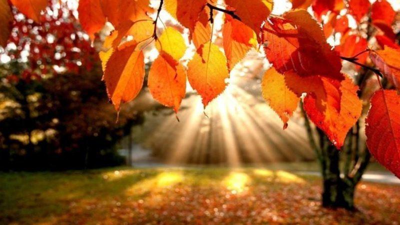 10 impactos surpreendentes que a chegada do Outono pode ter na sua saúde