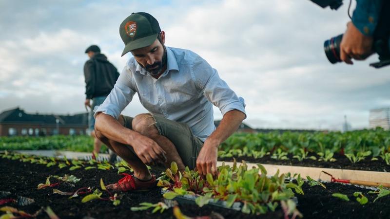Supermercado vende legumes plantados no telhado