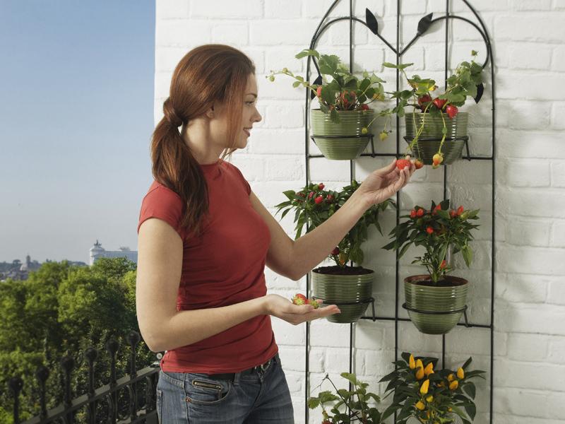 Decoração de paredes com espécies botânicas