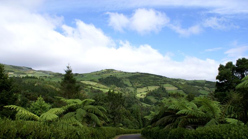 15 florestas, matas e bosques em Portugal que merecem uma visita. Quantos já visitou?