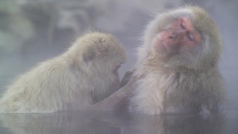 Previsão do tempo: muita neve e macacos