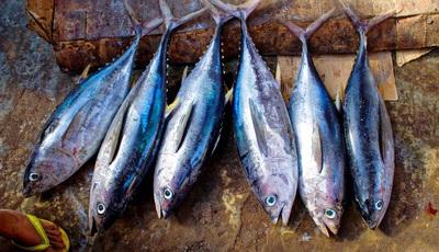 Estes são os peixes e frutos do mar com mais e menos mercúrio