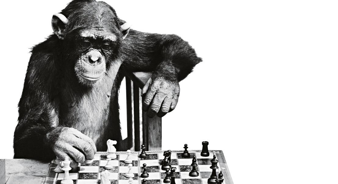 Porque é que as pessoas inteligentes cometem erros estúpidos?