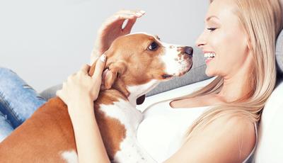 As doenças que pode apanhar através dos seus animais de estimação