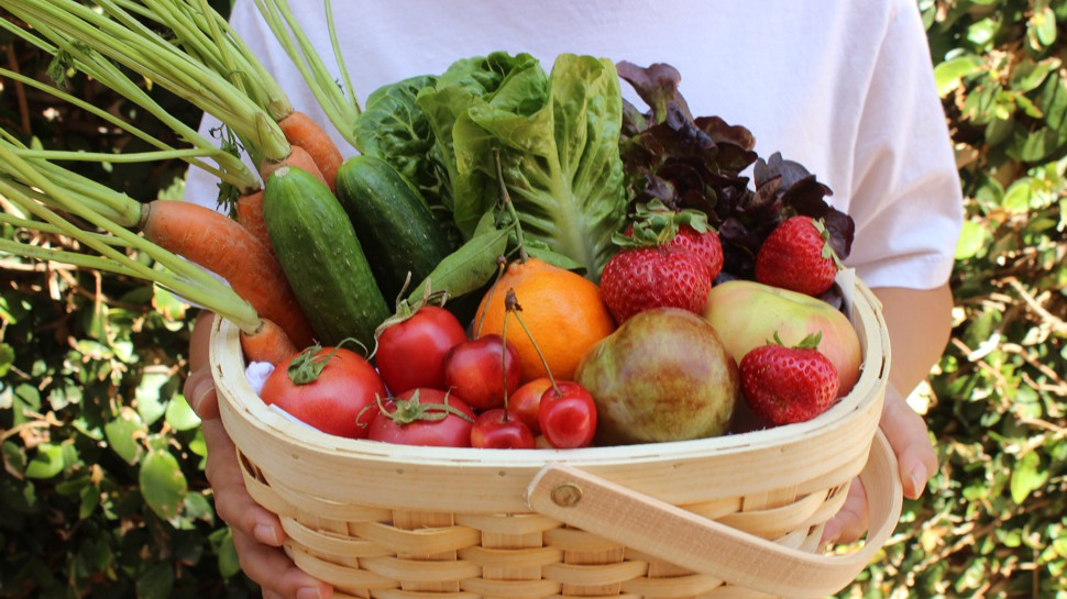 Mercados itinerantes de produtos locais e artesanato vão percorrer o Ribatejo Interior