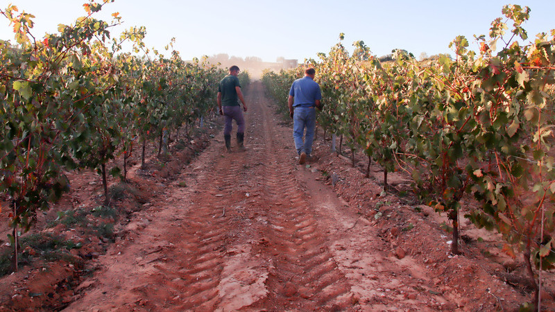 Empresário desenvolve levedura para produzir vinho diferenciado no Planalto Mirandês
