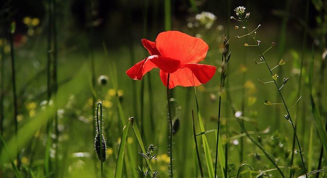 Chegou a primavera: conheça as mais belas flores e os seus significados