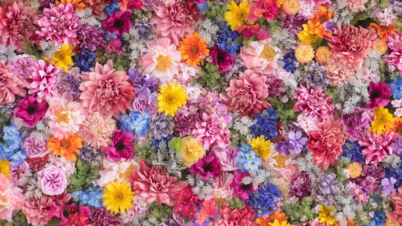50 plantas para a primavera e tudo o que precisa de saber para as cultivar