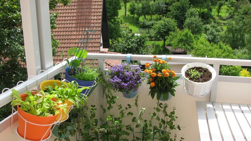 6 plantas que vão modernizar a sua varanda