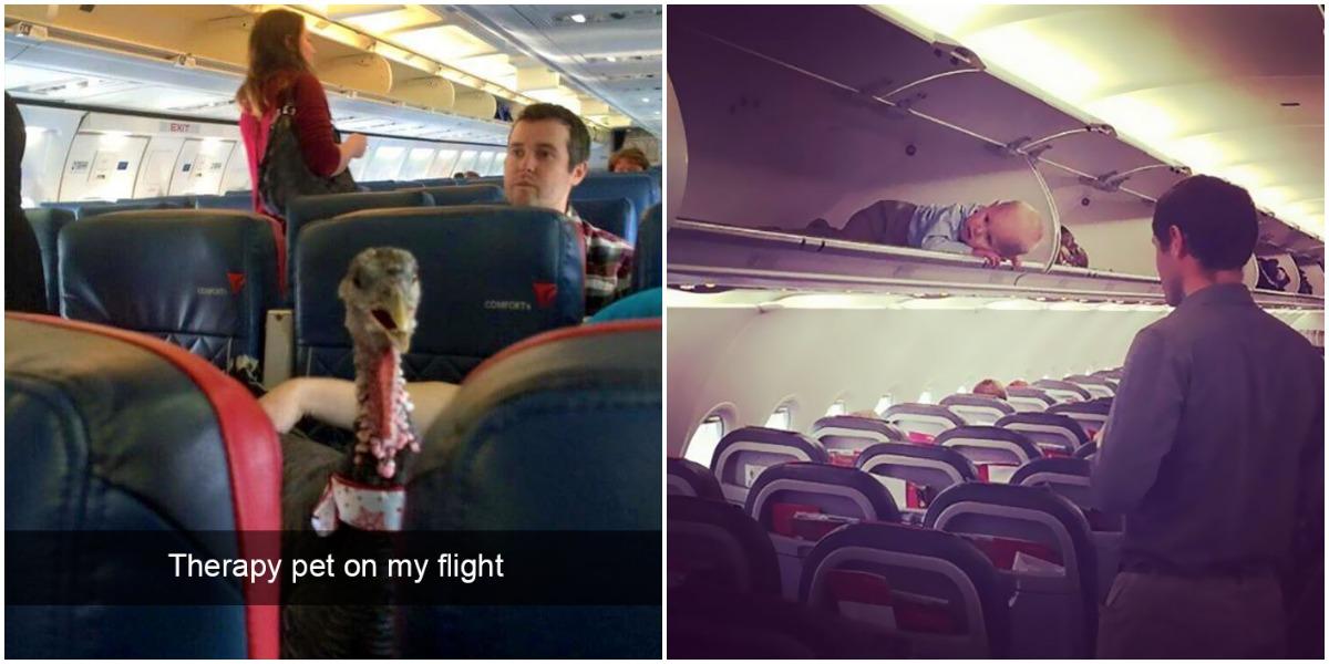 Estes passageiros devem estar loucos. As coisas mais absurdas vistas a bordo de um avião