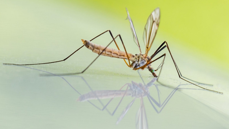 Um verão sem mosquitos? Saiba como