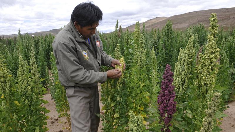 Especialistas defendem que avanços tecnológicos vão assegurar alimentação no futuro