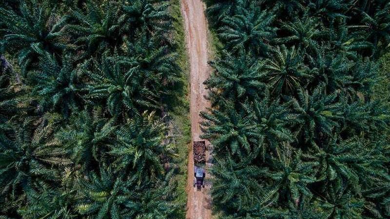 Óleo de palma: é possível construir uma indústria ao mesmo tempo que se preservam as florestas?