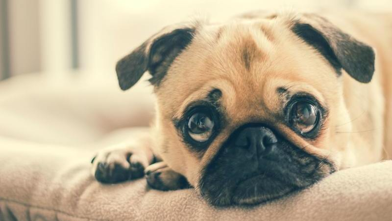 5 boas razões para adotar um cão depois dos 50