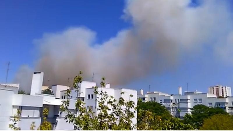 Lisboa: Incêndio em mato em Carnide já obrigou à evacuação de casas