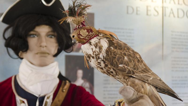 Há milhares de anos que homens e aves têm uma relação especial: fomos conhecê-la à Falcoaria Real