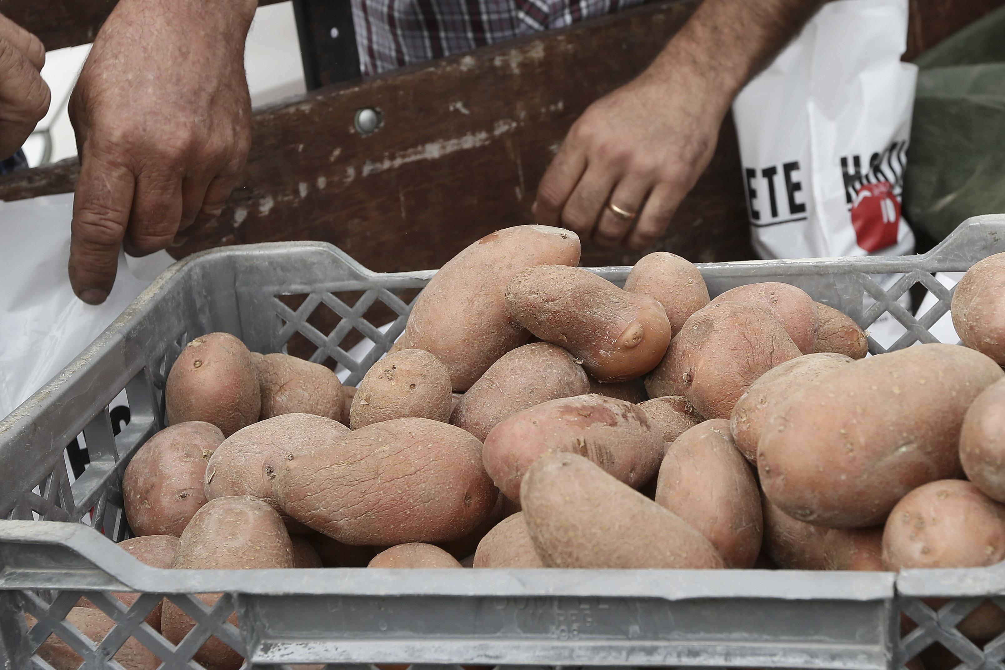 Agricultores pedem ao Governo que compre batatas para ajudar vítimas de incêndios