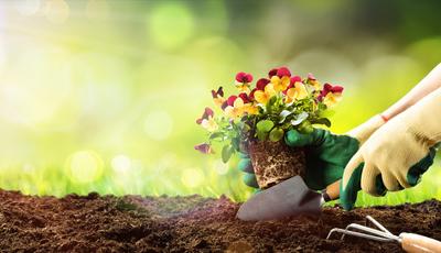 10 ideias para jardins pequenos