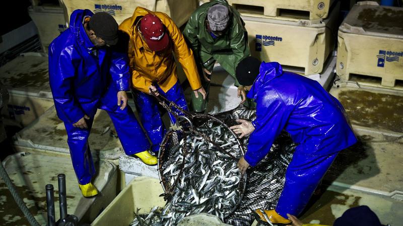 """Setor da sardinha diz que parecer científico é um """"insulto"""" aos sacrifícios dos pescadores"""