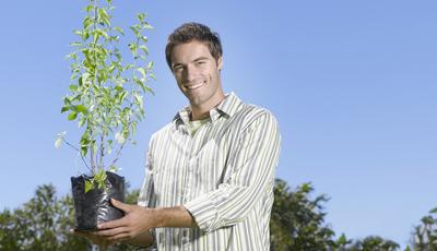 Os cuidados a ter quando plantar bolbos e árvores. As respostas a algumas das dúvidas mais comuns