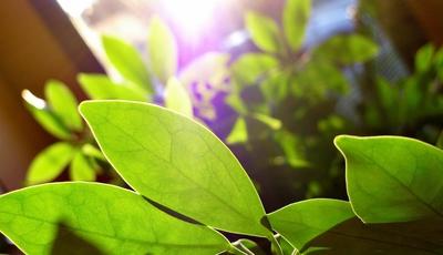 Plantas a salvo durante as férias