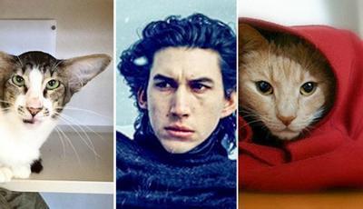 Descubra as diferenças: Gatos vs personagens de filmes e séries