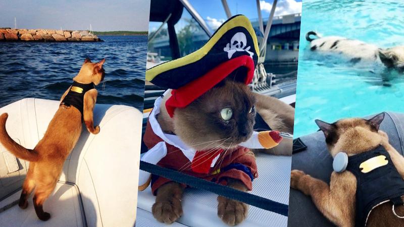Miss Rigby: esta gata aventureira passa a vida a navegar em alto mar e é uma sensação do Instagram
