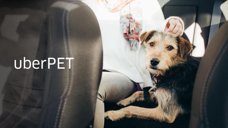 """Hoje é dia de Corrida do Animal e os carros da Uber """"ajudam"""" com uma versão Pet"""