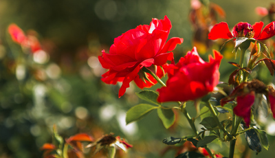 Salve as suas plantas das 12 pragas e doenças que mais as atacam no verão