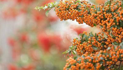 Arbustos com cor(es) que ficam bem no seu jardim