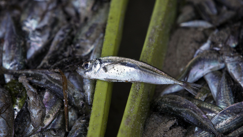 Reduzir para metade as capturas de carapau, menos 20% de pescada e 40% de linguado. A proposta de Bruxelas para a pesca em Portugal
