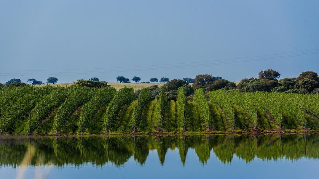 Fomos vindimar na Região dos Vinhos Verdes