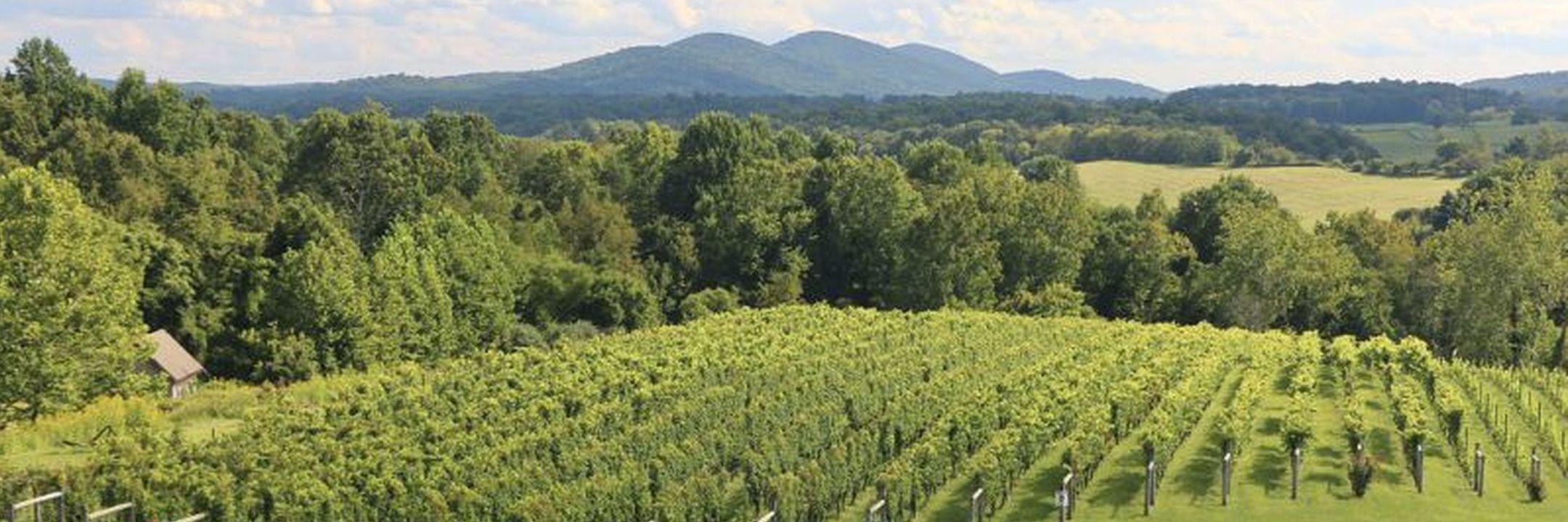 Conheça a cultura do vinho em Washington DC