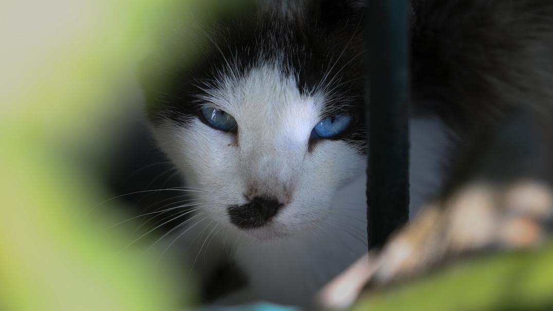 6 sinais de que o seu gato... não gosta de si