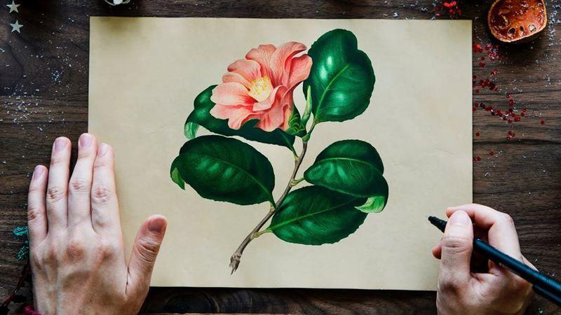 Desenhar é melhor do que escrever para a retenção de memória, diz estudo