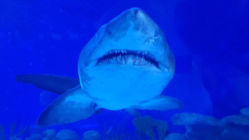 Surfista luta contra tubarão e sai praticamente ileso