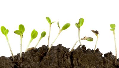 Produza os seus germinados e microvegetais em casa