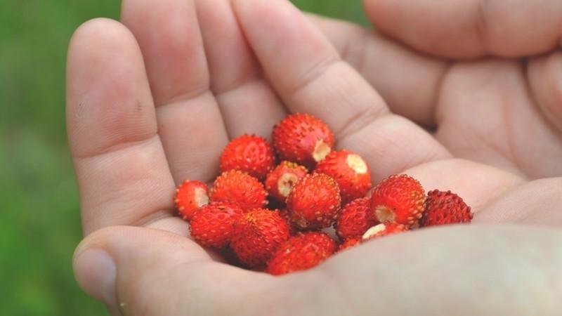 Pequenas alterações na alimentação também acarinham este nosso planeta. E é tão simples