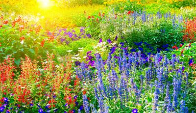 Cores e texturas que alegram o jardim. Aprenda a criar ambientes distintos