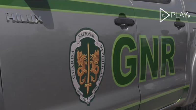 GNR apreende mais de uma tonelada de amêijoa avaliada em 8.800 euros
